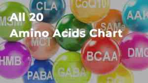 All 20 Amino Acids Chart (Free high-quality PDF download)
