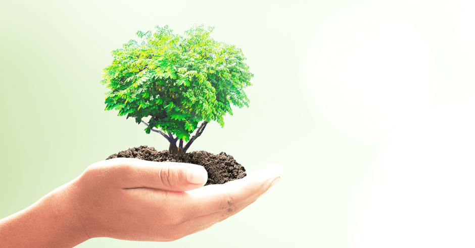 Hand holding small tree on green background