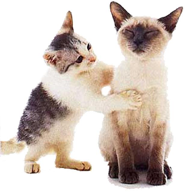 Chats qui jouent