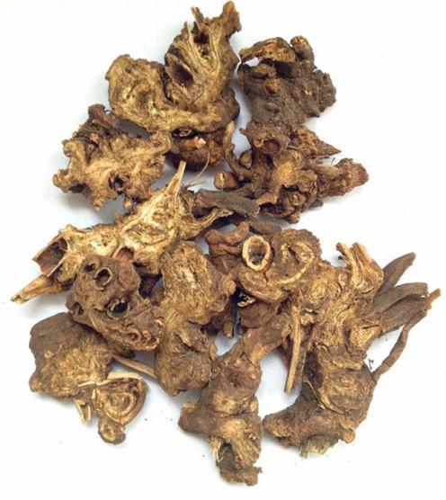 rhizoma-ligustici-gao-ben-%e8%97%81%e6%9c%ac1