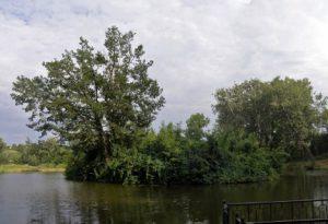 Озеро-у-Кагарлицькому-парку