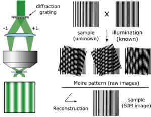 Structured Illumination Microscopy (srsim) | Cherry Biotech