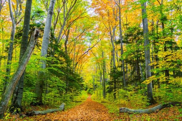 Alligator Hill trail in fall