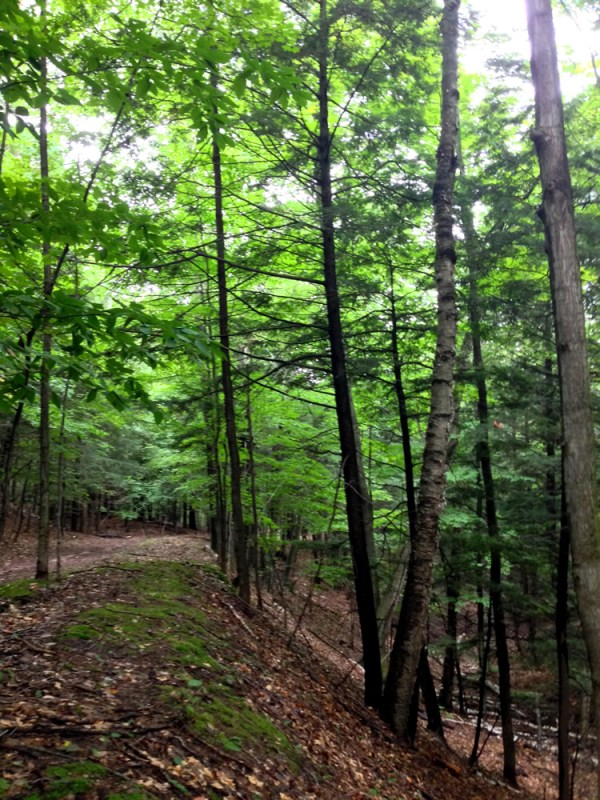 Alligator Hill Advanced Trail