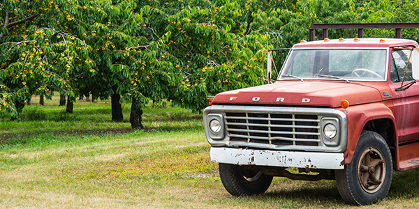 This old truck has worked many cherry harvests on this beautiful cherry orchard.
