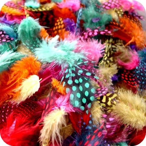 coloured-feathers