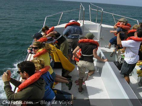 Bote para avistaje de ballenas