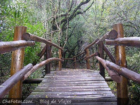 Puente peatonal en Parque El Palmar
