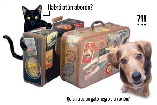 viajar-mascota-avion