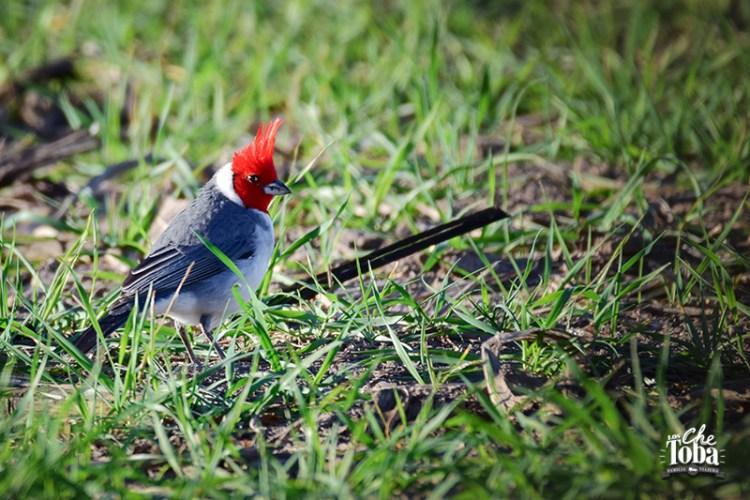 Turismo de Aves en Argentina