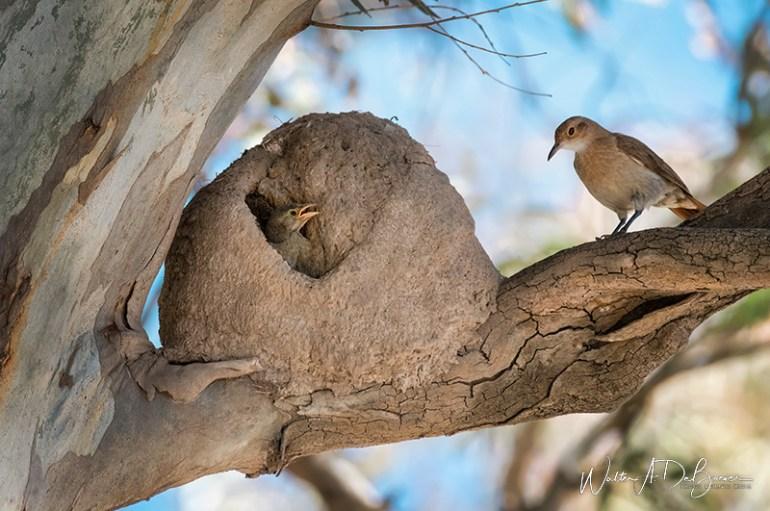 Cursos observación de aves villa maria