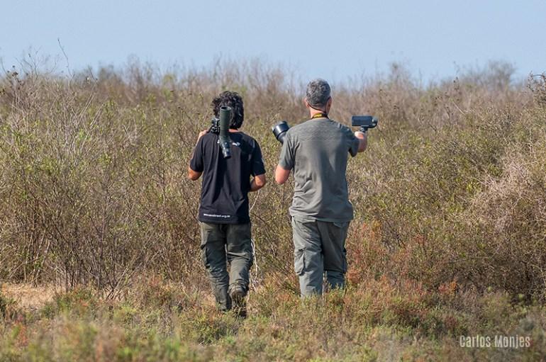 avistaje de aves Córdoba