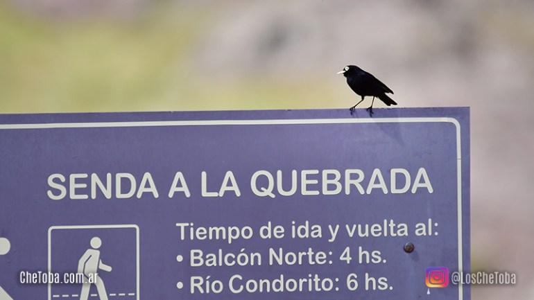 Senderos en PNA El Condorito