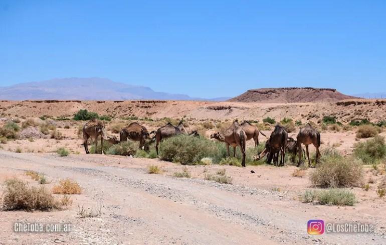 Ruta del desierto Marruecos