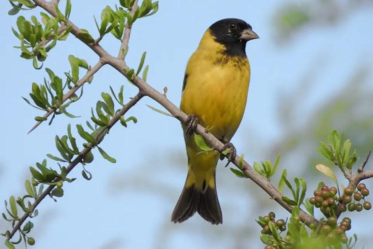 La mejor cámara de fotos para el avistaje de aves?