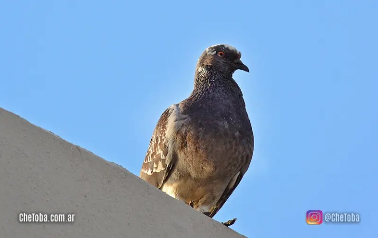 Aves comunes de ver en Argentina