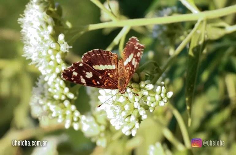 Foto de una mariposa Bataraza