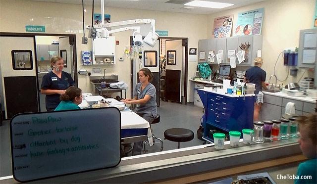 Hospital para Tortugas