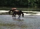 rando cheval perigord