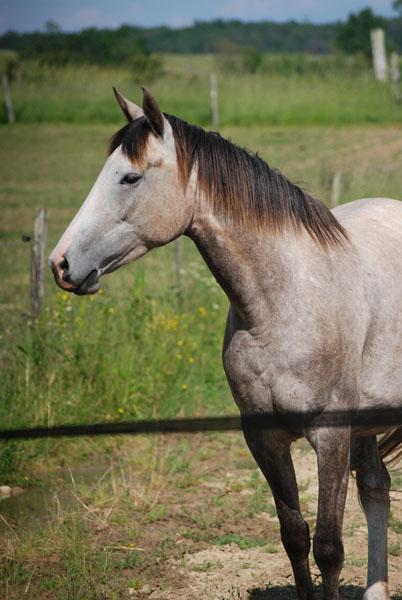 randonnées à cheval france