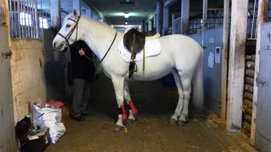 tapis blanc sur cheval blanc
