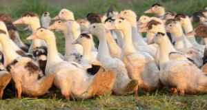 Autres Spécialités Canard