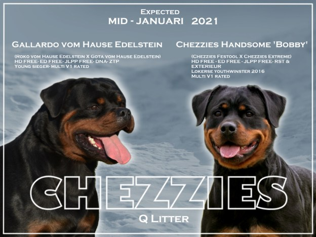 Chezzies Q litter expected V2