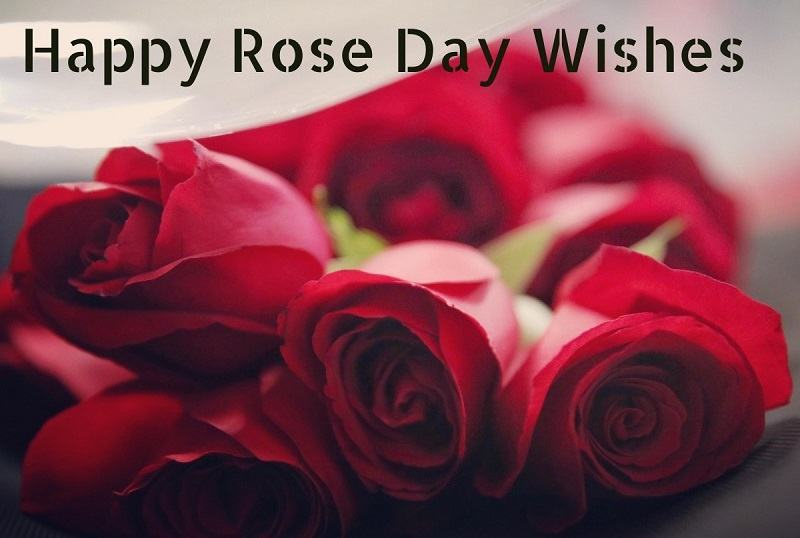 Happy Rose Day Wishes, Facebook, Whatsapp Quotes, SMS & Greetings