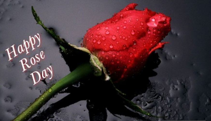 Happy Rose Day 2020 Sms Wishes For Friends Family Besties Roomy