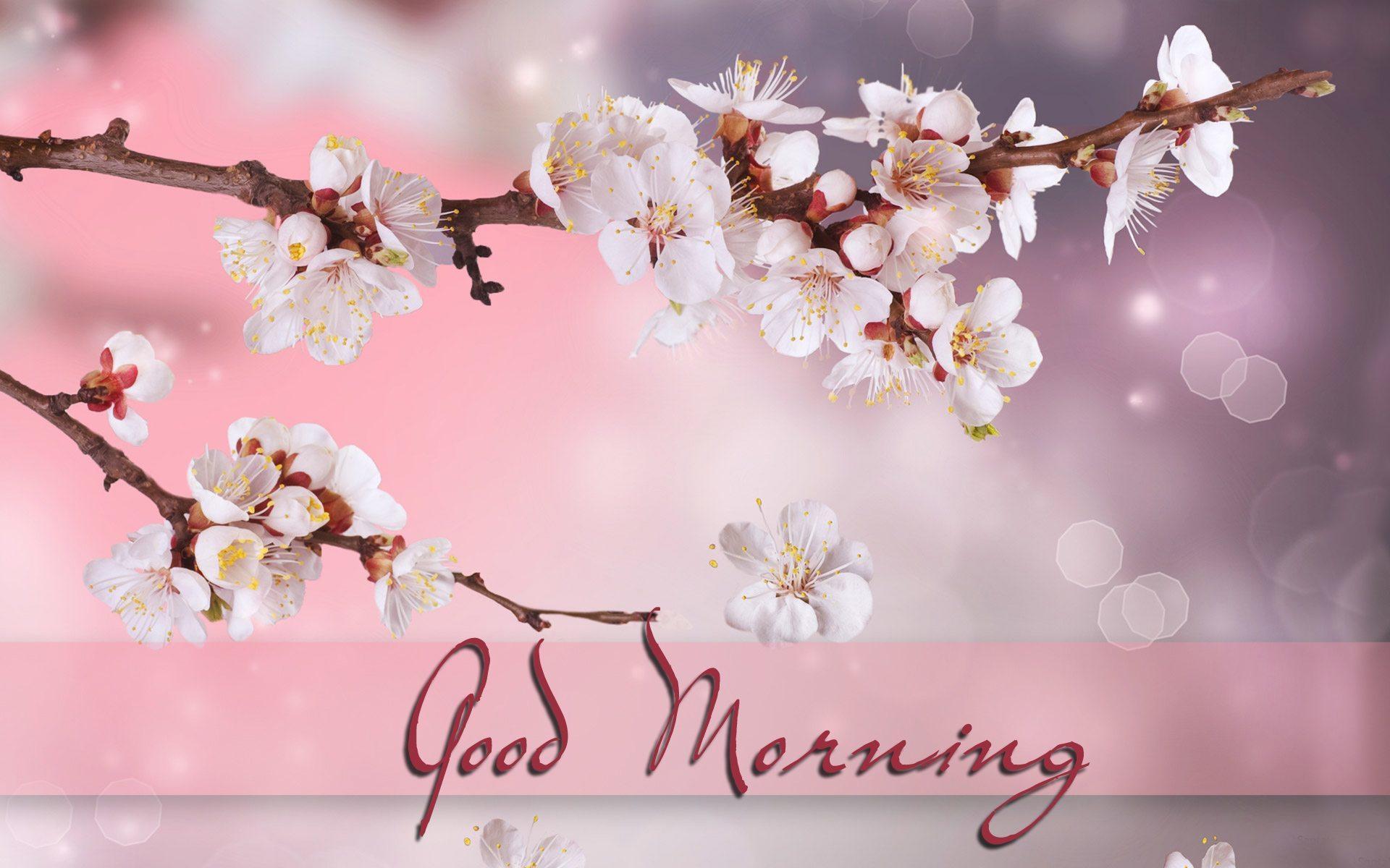 good_morning_hd_wallpaper