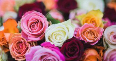 Benvenuto Maggio, mese delle rose, delle spose e della Madonna
