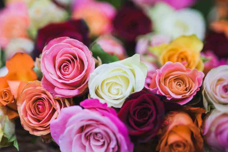 mese di maggio mese delle rose