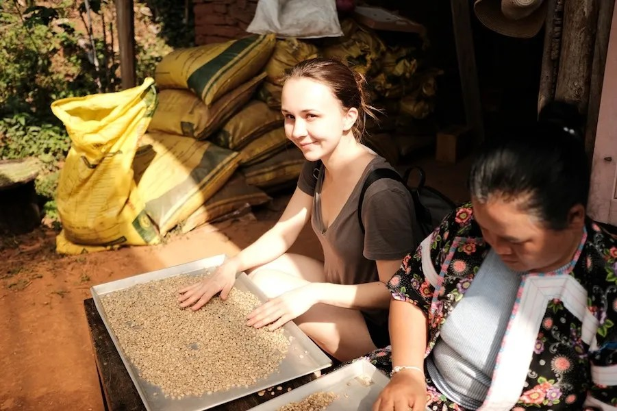Two women sorting coffee beans Chiang Mai Coffee Tour