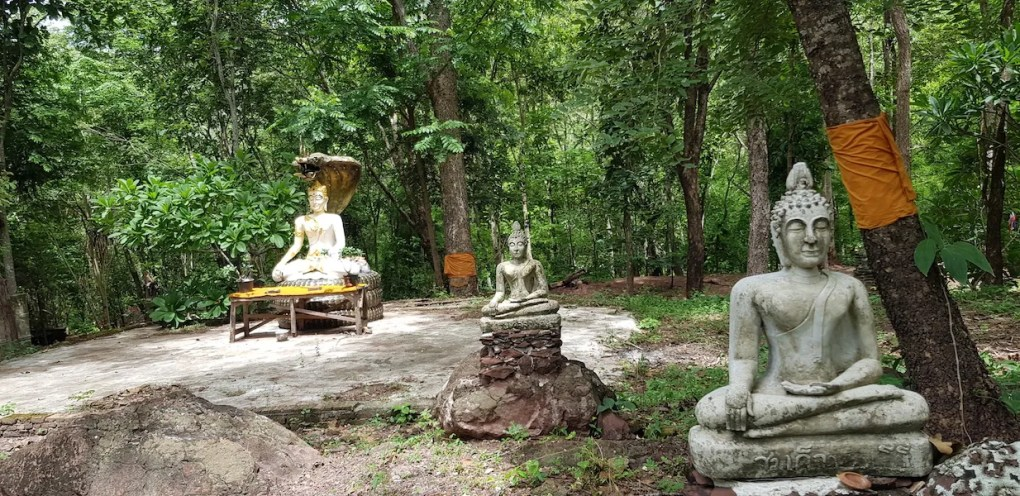 Buddha statues in a forest