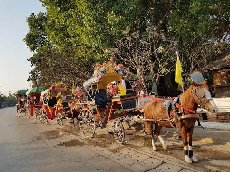 Horse carts in a row