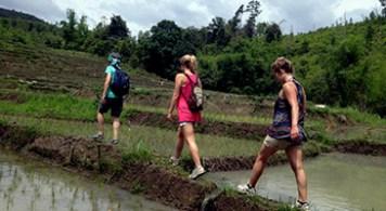 Rice paddies during the rice transplanting season