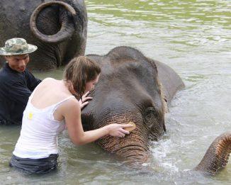 Elephant gets a good washing!