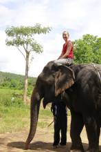 Elephant riding in countryside