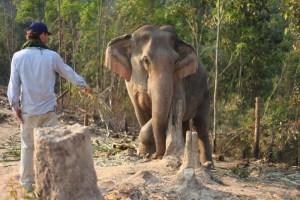 Mik feeding an elephant