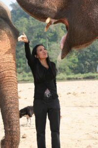The Elephant Trade Scandal in Thailand