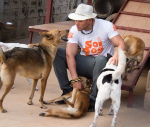 Soi Dog provides food and medication for all dogs rescued from the dog meat trade, with average spending of more than one million baht per month