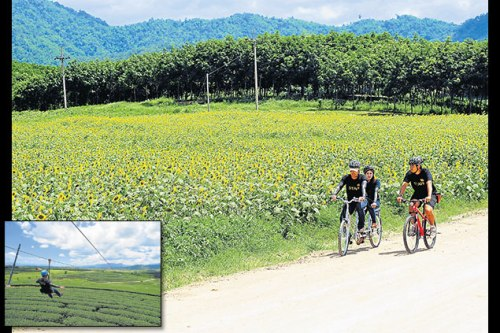 Cyclists pass a field of sunflowers next to the 5km-long bike trail at Singha Park. What was once a farm growing barley for the beer made by Boon Rawd Brewery has now been converted into a beautifully landscaped recreational space. By the end of this month, a series of zip-lines soaring over a nearby tea plantation will be in place, all ready for thrill-seeking visitors to try out.
