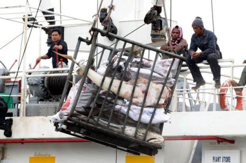 Fishermen load a catch of seafood onto a cargo ship bound for Thailand. Please credit and share this article with others using this link:http://www.bangkokpost.com/news/general/508475/mercy-flights-for-stranded-thais. View our policies at http://goo.gl/9HgTd and http://goo.gl/ou6Ip. © Post Publishing PCL. All rights reserved.