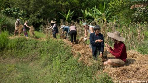 Both Thai and international volunteers and students work at the Chum Chon Ton Nam Nan Highland-Swamp-Field farm