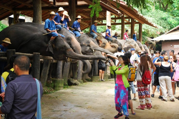 Chiang Rai to House Saved Elephants in Newly Built Sanctuary