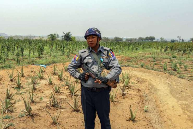 63 Year-Old American Faces Death Penalty for Cultivating Hemp in Myanmar