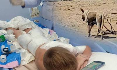 american boy attacked by dogs thailand