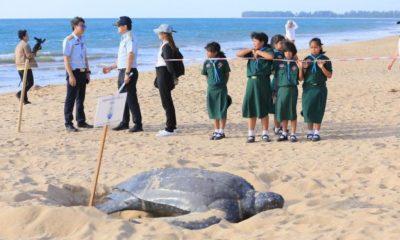 sea turtle phuket