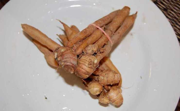 Thai ginger and Immune System