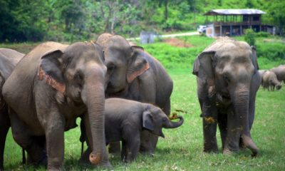 baby elephants at elephant camps